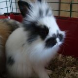 Rongeur Lapin Manny