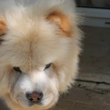 Chien Chow-Chow Mao