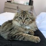 Chat Gouttière Mia