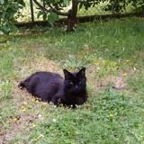 Chat Gouttière Moise