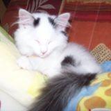 Chat Gouttière Moumousse