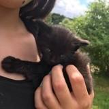 Chat Gouttière Nala