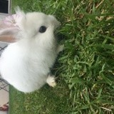 Rongeur Lapin Neige