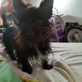 Chien Jack Russell Terrier Noee