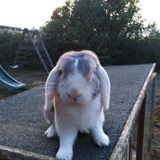 Rongeur Lapin Nuage