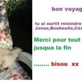 Chat Persan Bébitte