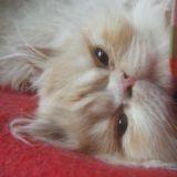 Chat Persan Bounty Lou