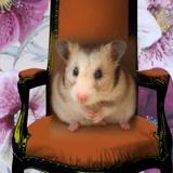 Rongeur Hamster Piloune