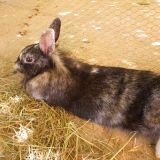 Rongeur Lapin Pomme