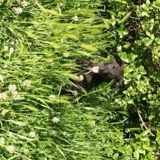 Chien Rottweiler Pumba