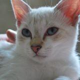 Chat Puuki