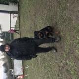 Chien Rottweiler Osky