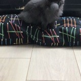 Rongeur Lapin Simba
