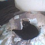Chat Gouttière Suki