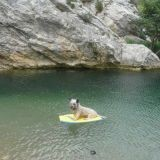 Chien Skye Terrier Teejee