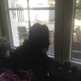 Chien Terrier tibétain Marius