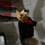 Chien Beagle Toby