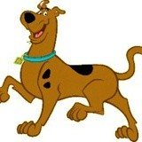 Chien Beagle Yankee