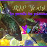 Yoshi Au Paradis
