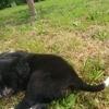 Coco Et L'Autre Toto, chien Border Collie