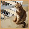 Chacha, chat Gouttière