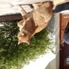 Photo de Caramelle, chat Gouttière - 420741