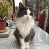 Chausette, chat Gouttière