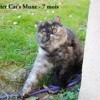 Chester Cat Mune, chat Exotic