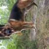 Photo de Junior, chien - 425009
