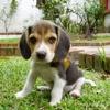 Photo de Roxy, chien - 442335