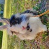 Coco, rongeur Lapin
