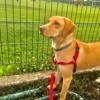 Photo de Diane, chien - 443415