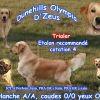 Dunehills Olympia D'Zeus, chien Golden Retriever