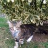 Photo de Ulysse, chaton Européen - 390409