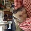 Eve, rongeur Cochon d'Inde