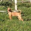 Gypsie Del Campo, chien