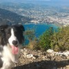 Ice, chien Border Collie