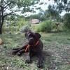 Igor, chien Chien courant italien