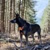 Kenya, chien Berger belge