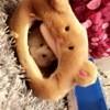 Kira, rongeur Hamster