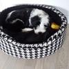 Lasco, chien Terrier tibétain