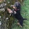 Lola, chien Jagdterrier