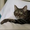 Marvin, chat Gouttière