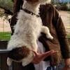 Milo, chien Parson Russell Terrier