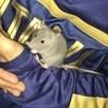 Mimi, rongeur Rat