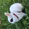 Photo de Miss, rongeur - 417869