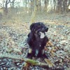 Moka, chien Bouvier bernois