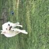 Photo de Moka, chien Berger blanc suisse - 402319
