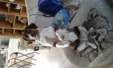 Photo de Moka, chien - 431864