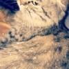 Moumoune, chat Scottish Fold à poil long